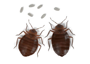 Hodges, AL Bed Bug Treatment