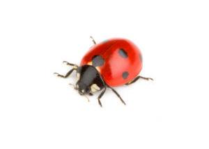 Las Vegas, NV Ladybug Treatment