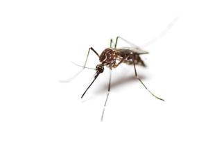 Parker Mosquito Treatment